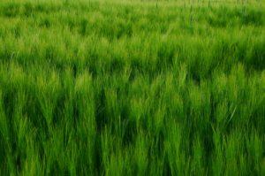 cereals-1423605_1280
