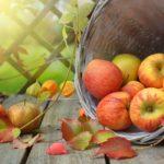 Správná výživa na podzim: 5 potravin, na které byste neměli zapomínat