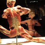 Výstava lidských těl opět v Praze